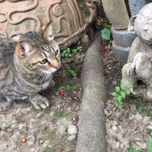 可愛い猫の来客です。つちぼとけと一緒に